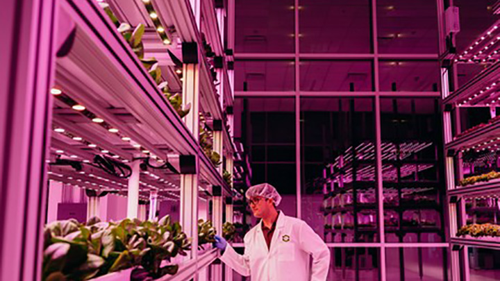 Philips Lighting - City farming