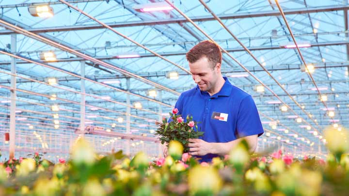 Greenhouse LEDs for fruits – get lower energy costs, predictable harvests and higher yields